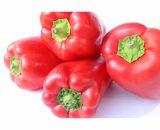 Pimenton rojo organico