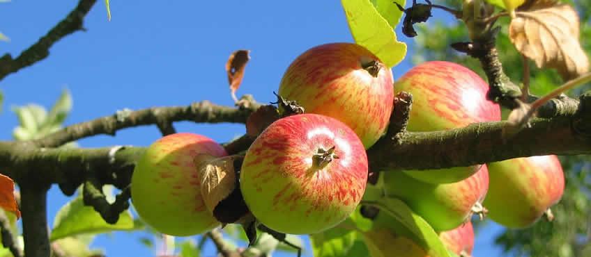 Orgánicos y antioxidantes