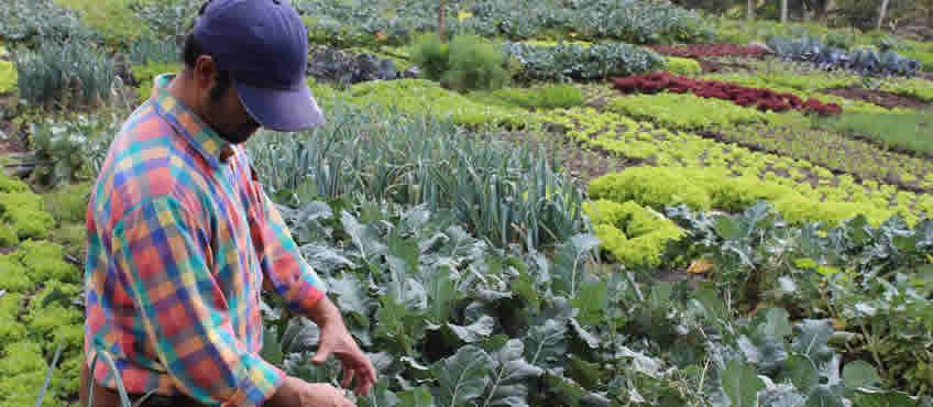 Por que una huerta produce alimentos orgánicos