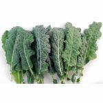 Kale organico