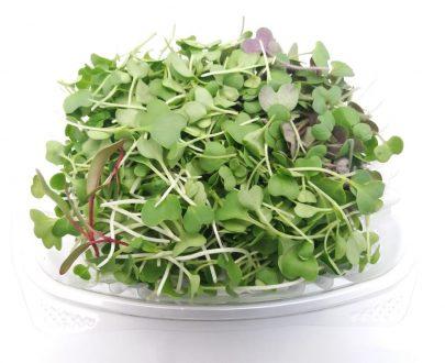 50g. de germinados orgánicos, Rúgula, kale, espinaca, hojas de remolacha, acelga