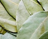 Laurel orgánico